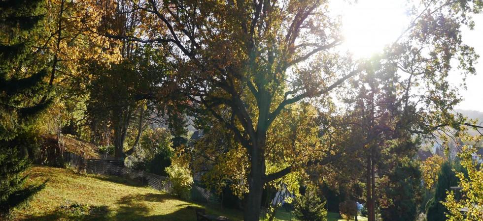 Haus Herfurth – Garten